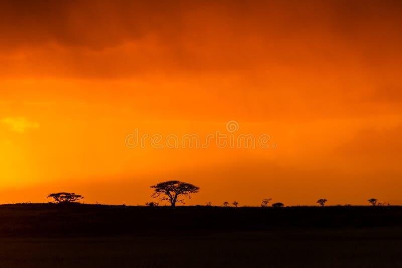 Alba africana Colourful nel Sudafrica fotografia stock