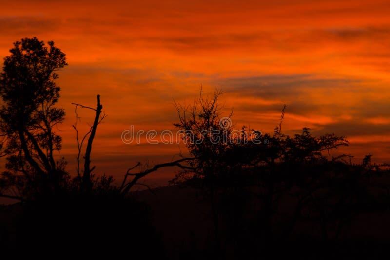 Alba africana rossa di mattina fotografia stock libera da diritti