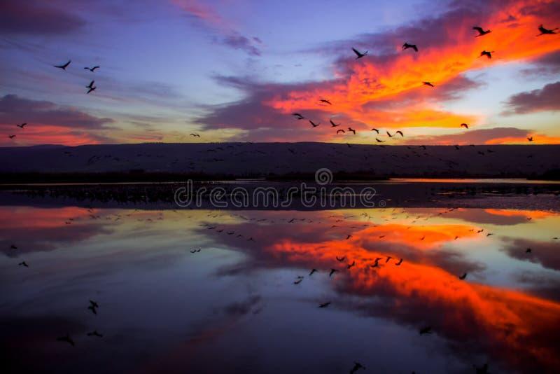 Alba al parco del lago hula immagine stock libera da diritti