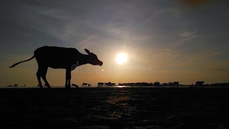 Alba al villaggio immagine stock