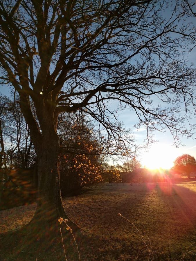 Alba attraverso gli alberi immagini stock libere da diritti