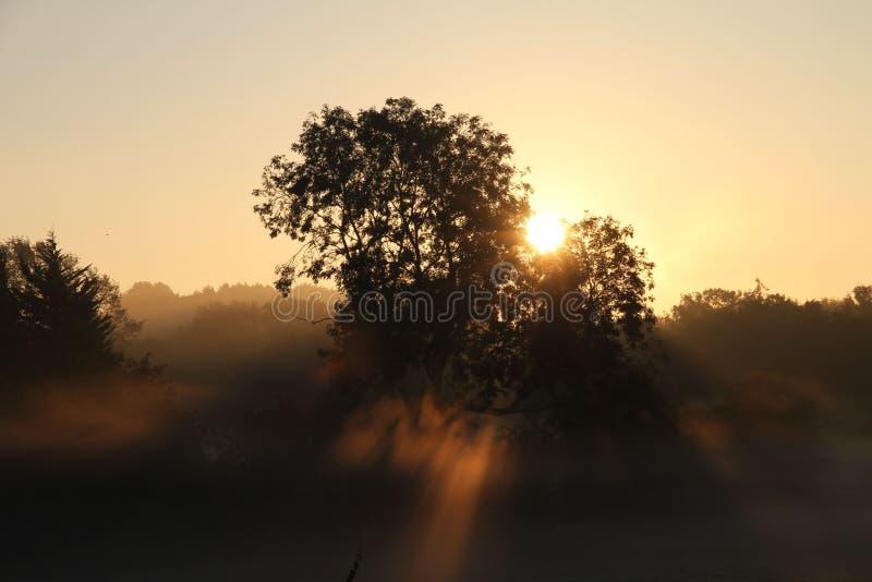 Alba attraverso la foschia e gli alberi fotografia stock