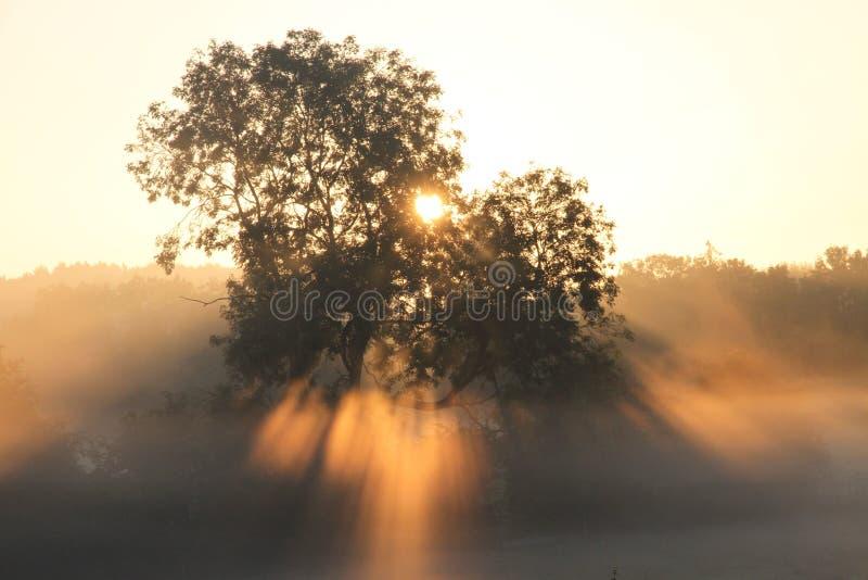 Alba attraverso la foschia e gli alberi fotografie stock libere da diritti