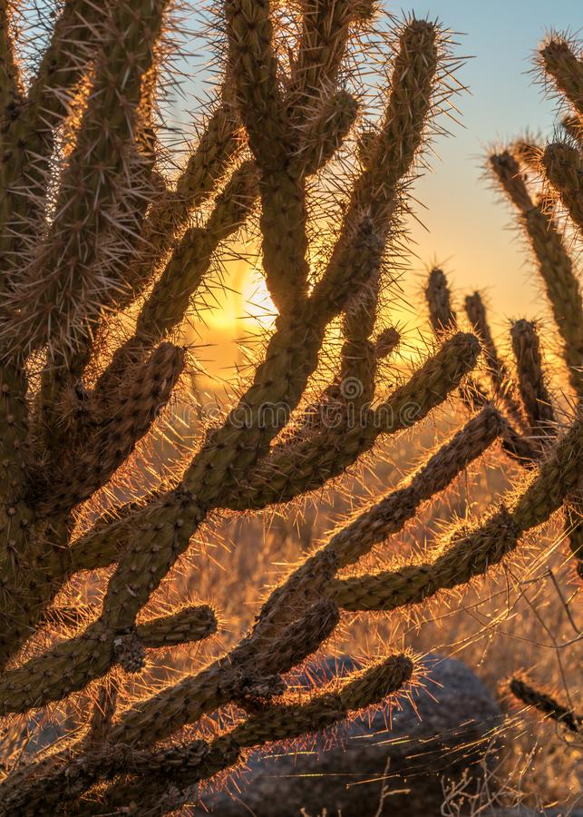 Alba con nel parco di stato del deserto di Anza Borrego fotografia stock