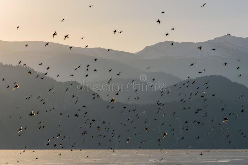 Alba del ghiaccio del lago delle montagne degli uccelli immagine stock