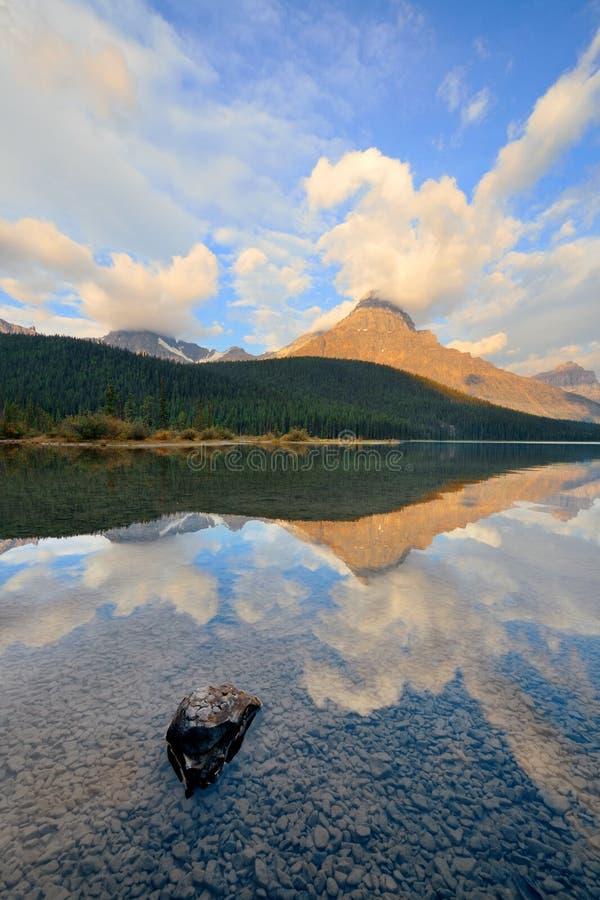 Alba del lago waterfowl fotografia stock
