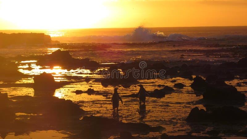 Alba del pinguino fotografie stock libere da diritti