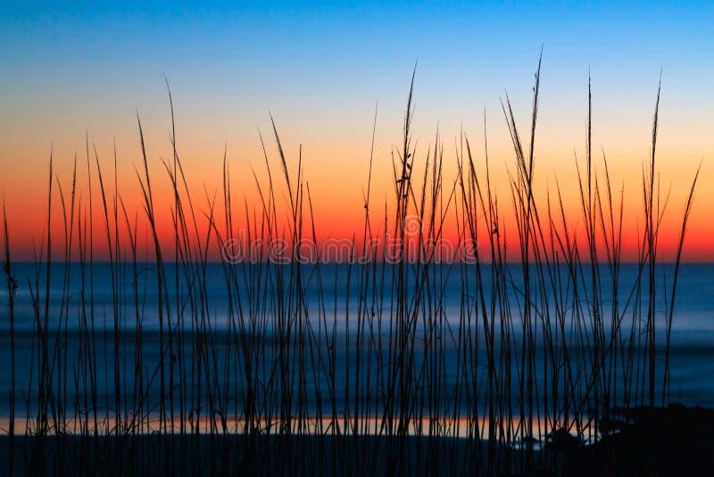 Alba dell'erba della duna immagine stock
