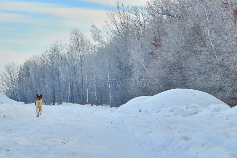 Alba della città di inverno di mattina immagine stock