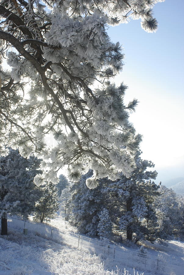 Alba 5 della montagna fotografie stock libere da diritti
