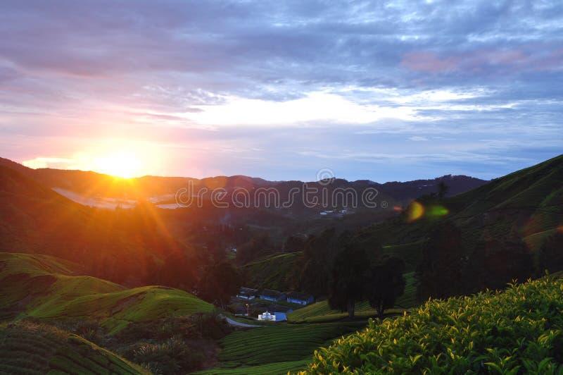 Alba della piantagione di tè dell'altopiano di Cameron fotografia stock libera da diritti