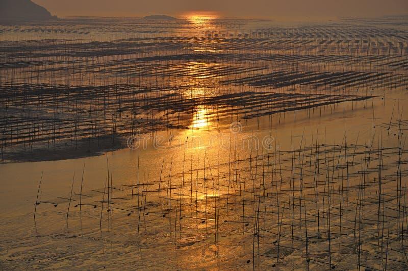Alba della spiaggia del Fujian Xiapu, Cina immagine stock