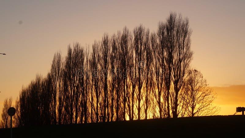 Alba di mattina in Ngaruawahia, Nuova Zelanda fotografie stock libere da diritti