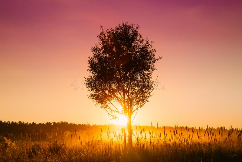 Alba di tramonto nell'albero di Misty Autumn Meadow Landscape With Lonely fotografia stock libera da diritti