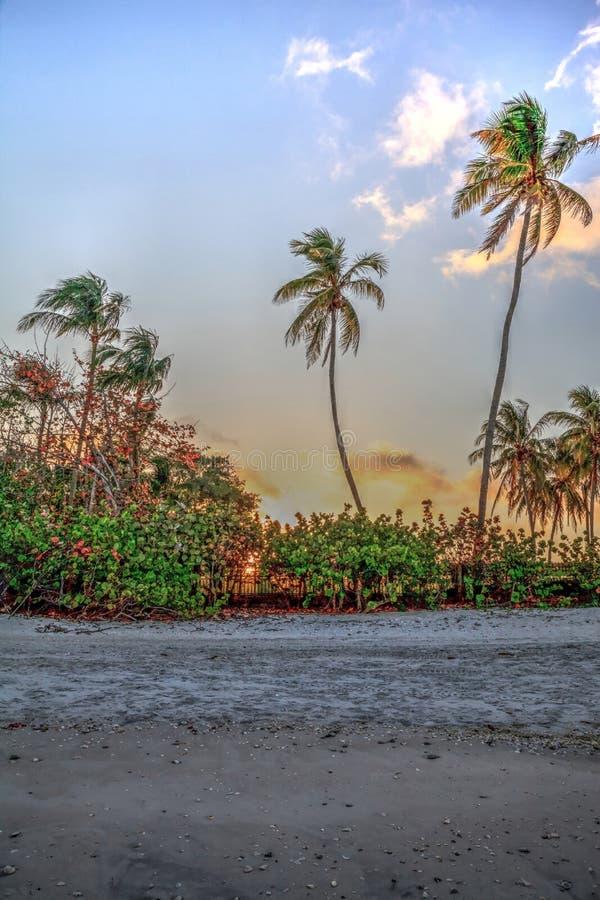 Alba dorata sopra le palme sulla spiaggia in Port Royal fotografie stock libere da diritti
