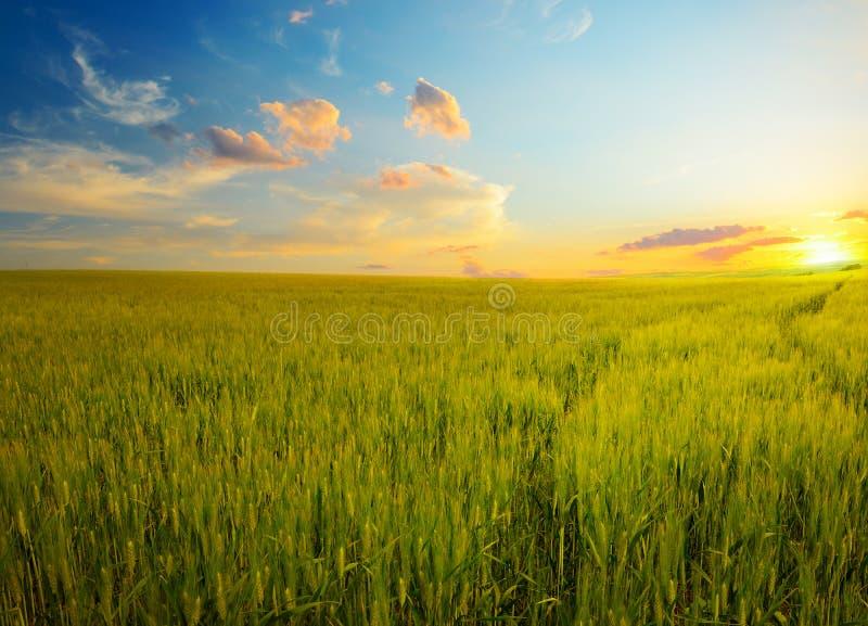 Alba epica sul giacimento di grano immagini stock libere da diritti