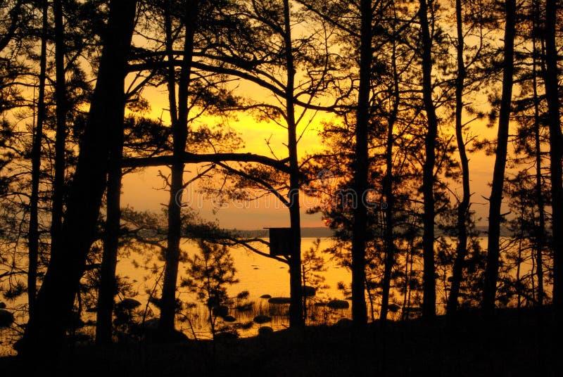 Alba fra gli alberi immagini stock libere da diritti