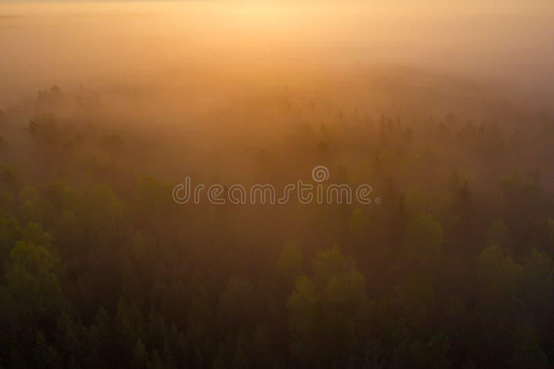 Alba luminosa sopra la vista aerea nebbiosa della foresta Foresta nebbiosa alla vista superiore di alba Paesaggio della natura de immagine stock libera da diritti