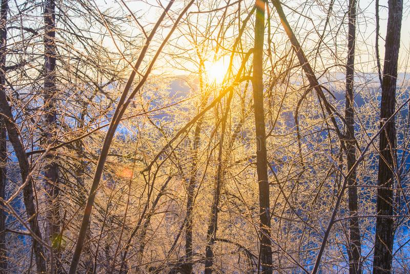 Alba maestosa nel paesaggio delle montagne di inverno Il Sun evidenzia i rami di albero coperti di ghiaccio e di neve fotografia stock