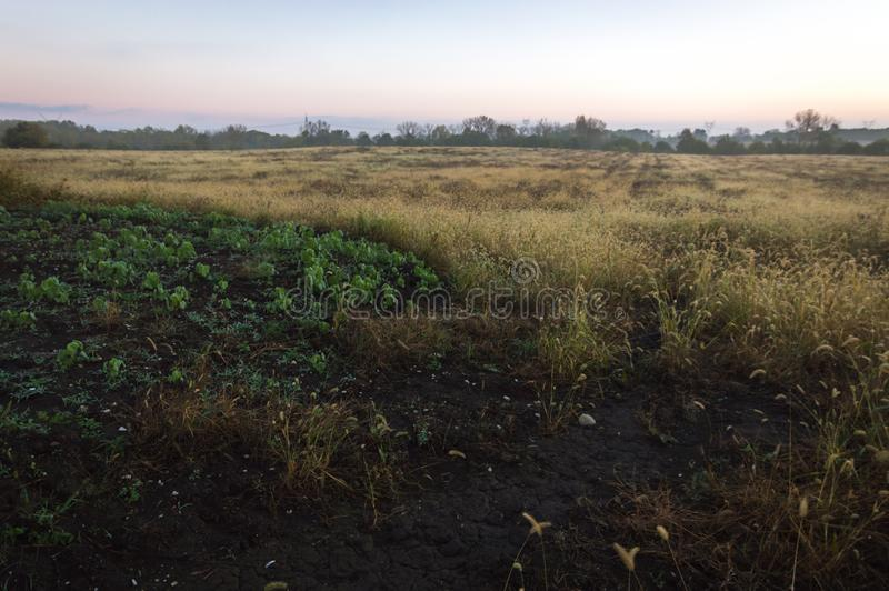 Alba nazionale della riserva della prateria di Midewin Tallgrass immagine stock
