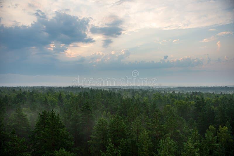alba nebbiosa e nuvolosa sopra i campi e le foreste verdi immagine stock libera da diritti