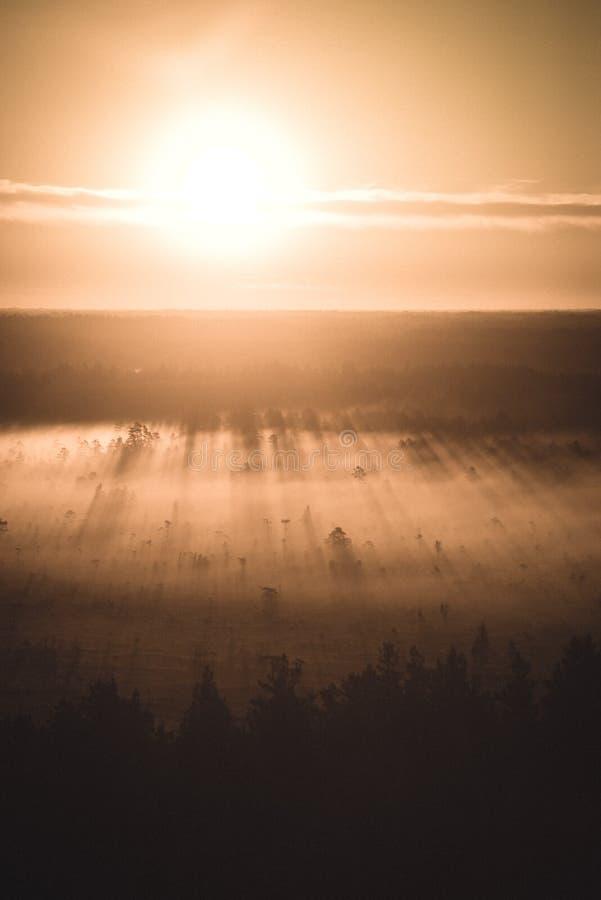 alba nebbiosa variopinta sopra la foresta con i raggi luminosi e della foschia - retro sguardo d'annata fotografia stock
