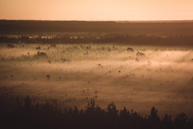 alba nebbiosa variopinta sopra la foresta con i raggi luminosi e della foschia - retro sguardo d'annata fotografie stock