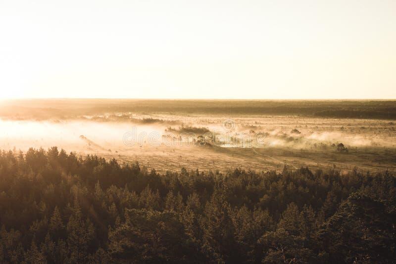 alba nebbiosa variopinta sopra la foresta con i raggi luminosi e della foschia - retro sguardo d'annata immagine stock