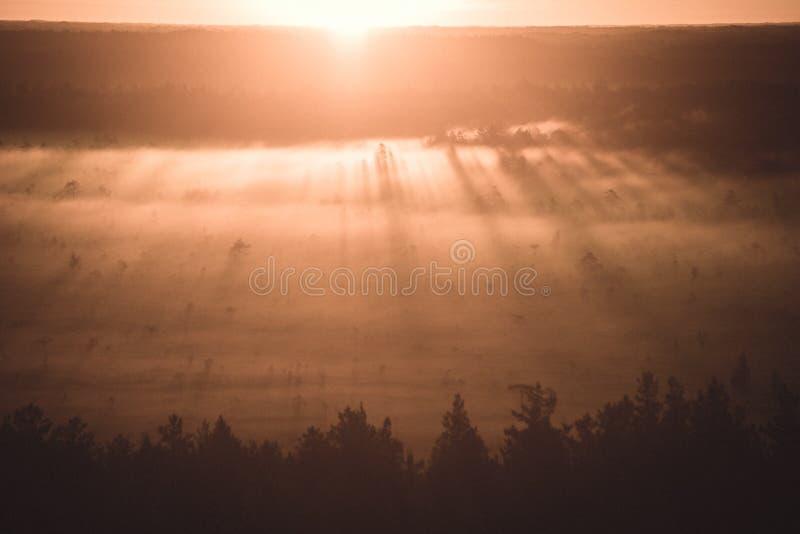 alba nebbiosa variopinta sopra la foresta con i raggi luminosi e della foschia - retro sguardo d'annata immagini stock