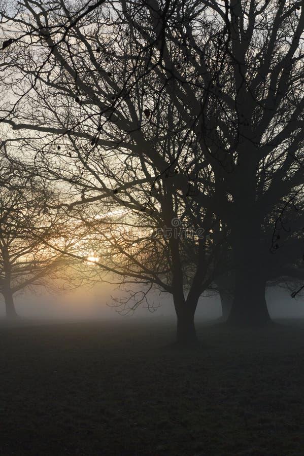Alba nebbiosa in West Sussex rurale, Inghilterra immagine stock libera da diritti