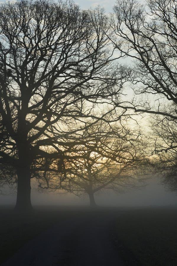 Alba nebbiosa in West Sussex rurale, Inghilterra immagine stock