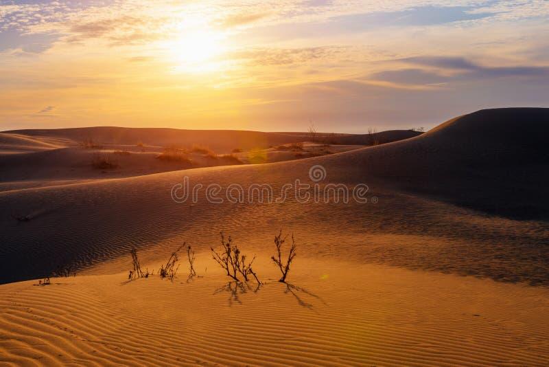Alba nel deserto della duna immagini stock libere da diritti