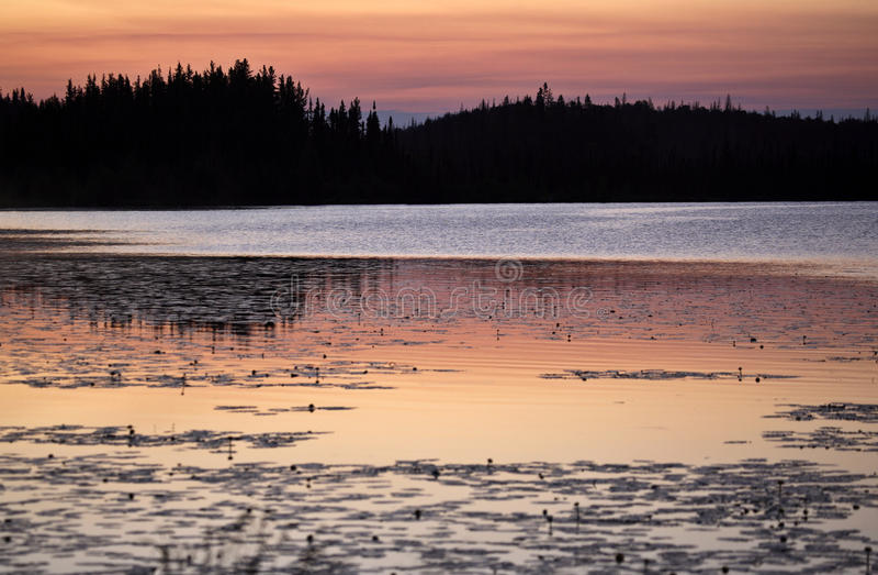 Alba nel lago lynx fotografia stock