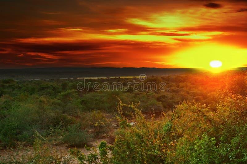 Alba in savanna africana fotografie stock libere da diritti