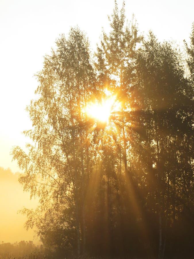 Alba selvaggia del paesaggio della bella natura con gli alberi e la foschia nebbiosa fotografia stock libera da diritti