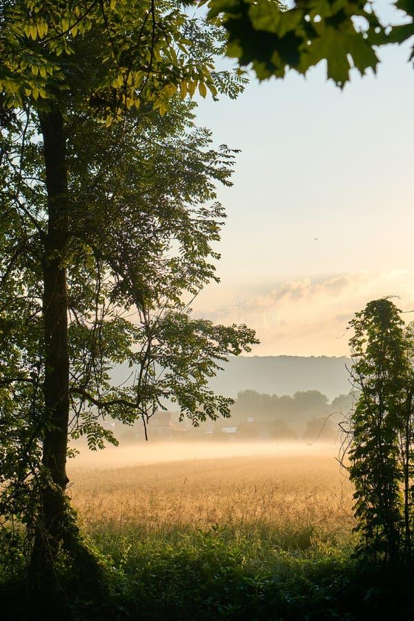 Alba sopra un grainfield con nebbia Colori vivi con le nuvole drammatiche Bayreuth, Germania verticale fotografia stock