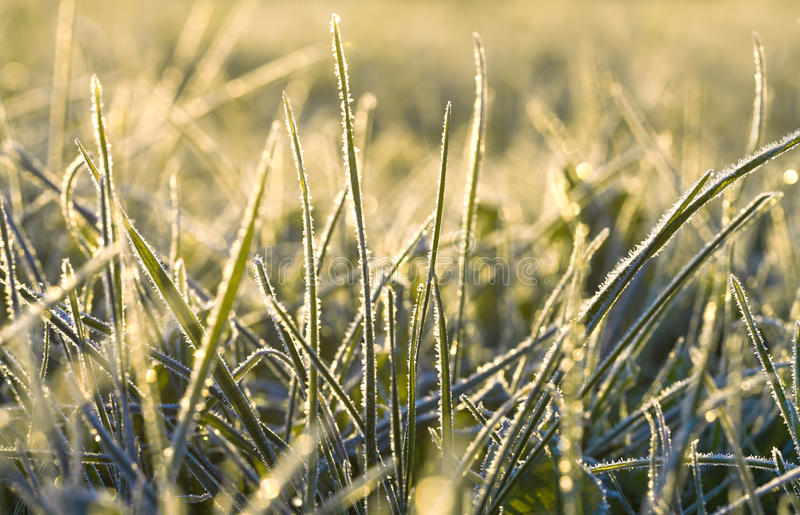 Alba sopra un prato di autunno, luce del sole un'erba fotografia stock