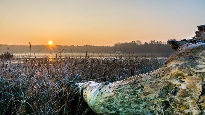 Alba sopra uno stagno nebbioso con il tronco di albero di menzogne nella priorità alta immagini stock