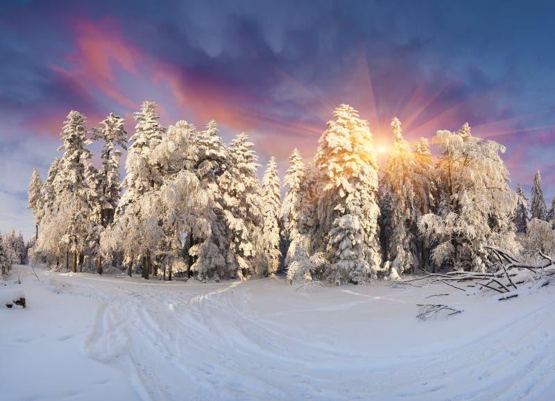Alba splendida di inverno in montagne carpatiche con il cowere della neve immagini stock