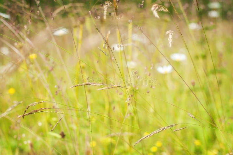 Alba stupefacente al prato di estate con i wildflowers fotografie stock