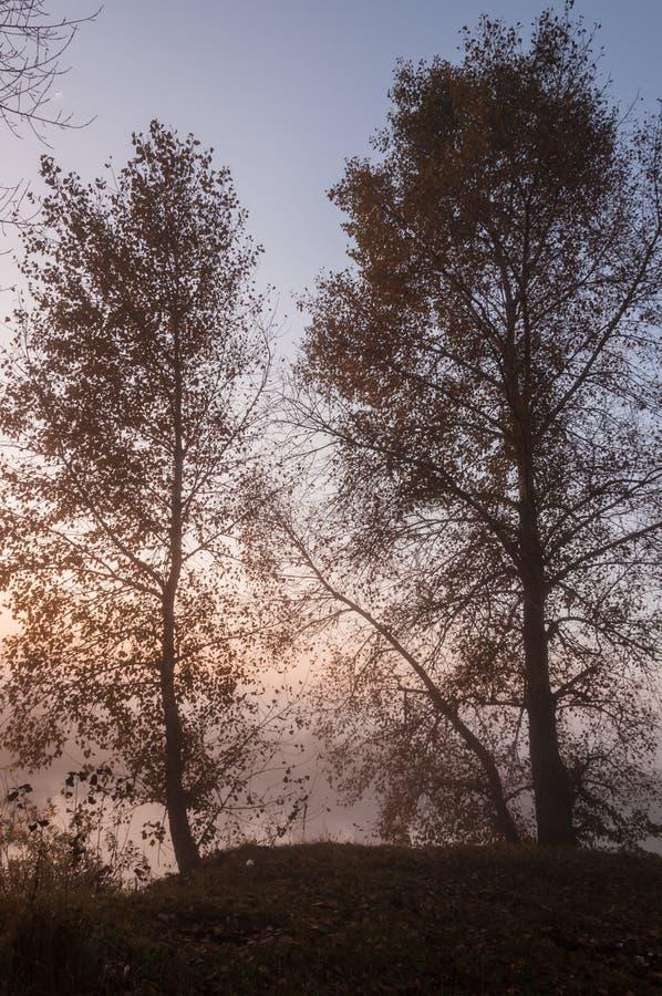 Alba stupefacente bella sopra il lago, nebbioso immagini stock
