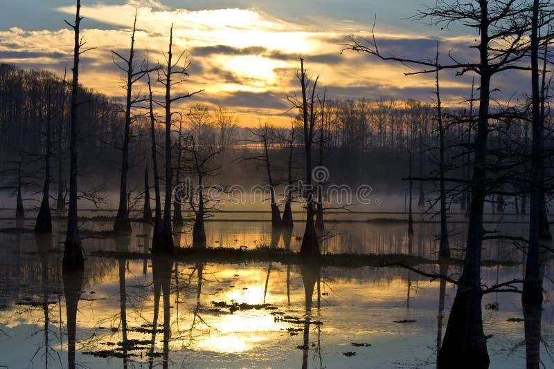 Alba sui rami paludosi di fiume fotografia stock