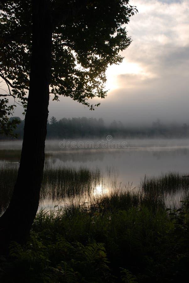 Alba sul lago nebbioso con l'albero immagine stock libera da diritti