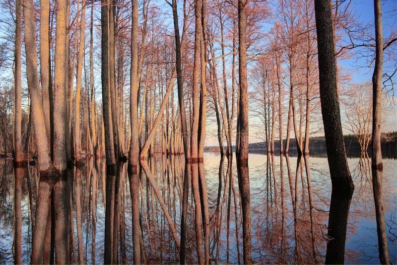 Alba sul lago, Russia fotografia stock libera da diritti