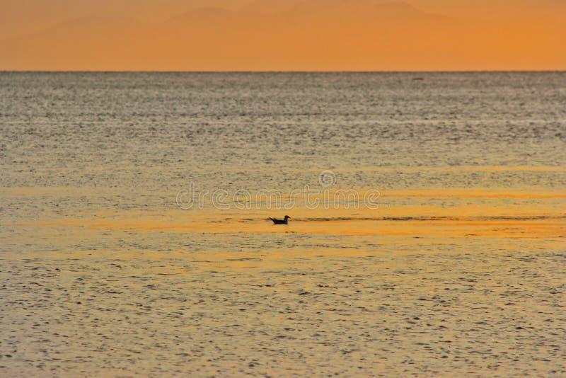Alba sull'isola di Kunashir fotografia stock