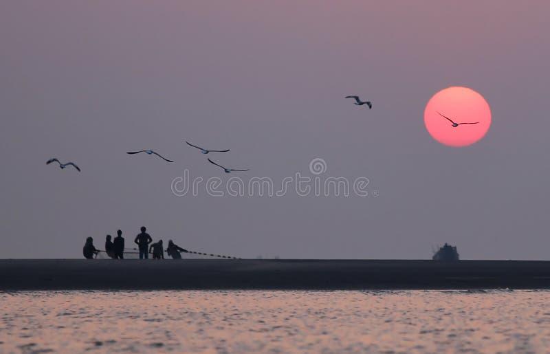 Alba sulla spiaggia con gli uccelli di volo fotografia stock