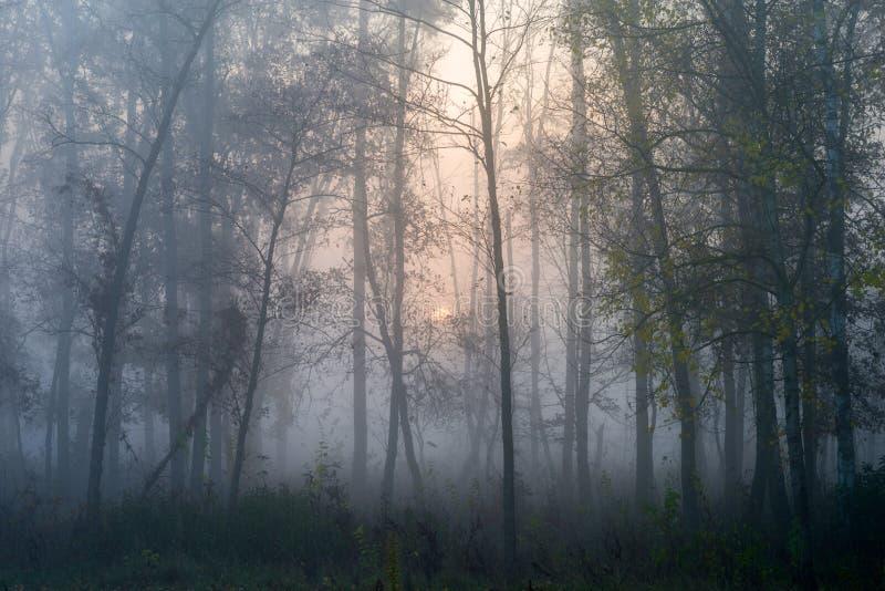 Alba in un paesaggio nebbioso di autunno della foresta con il sol levante e la nebbia fotografia stock