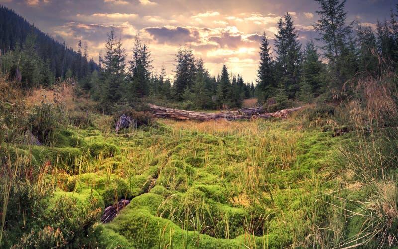 Alba variopinta di estate nella foresta magica immagini stock