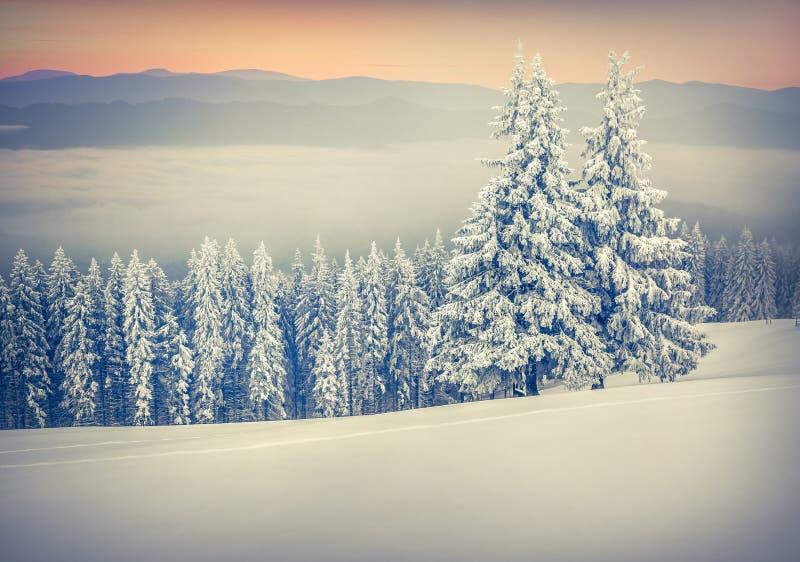 Alba variopinta di inverno in montagne nebbiose fotografia stock