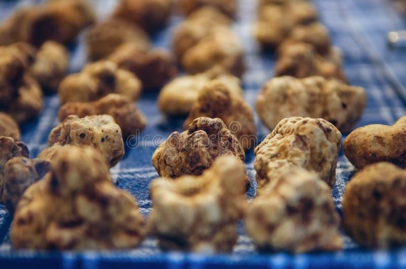 Alba white truffles at the Fiera del Tartufo. White Truffles Tuber Magnatum Pico on a trader stall of the Fiera del Tartufo Truffle Fair of Alba, Piedmont Italy stock photos